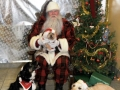 Santa poses with 3 dogs, one on his lab, 2 large dogs at either side of his feet