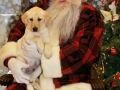 Santa poses with a small yellow lab puppy