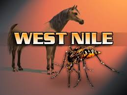 "Image of a horse and a mosquito, text overtop that reads ""West Nile""."